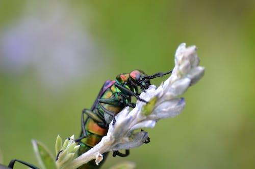 böcekler, Doğa Ana, Mor çiçekler, rengarenk içeren Ücretsiz stok fotoğraf