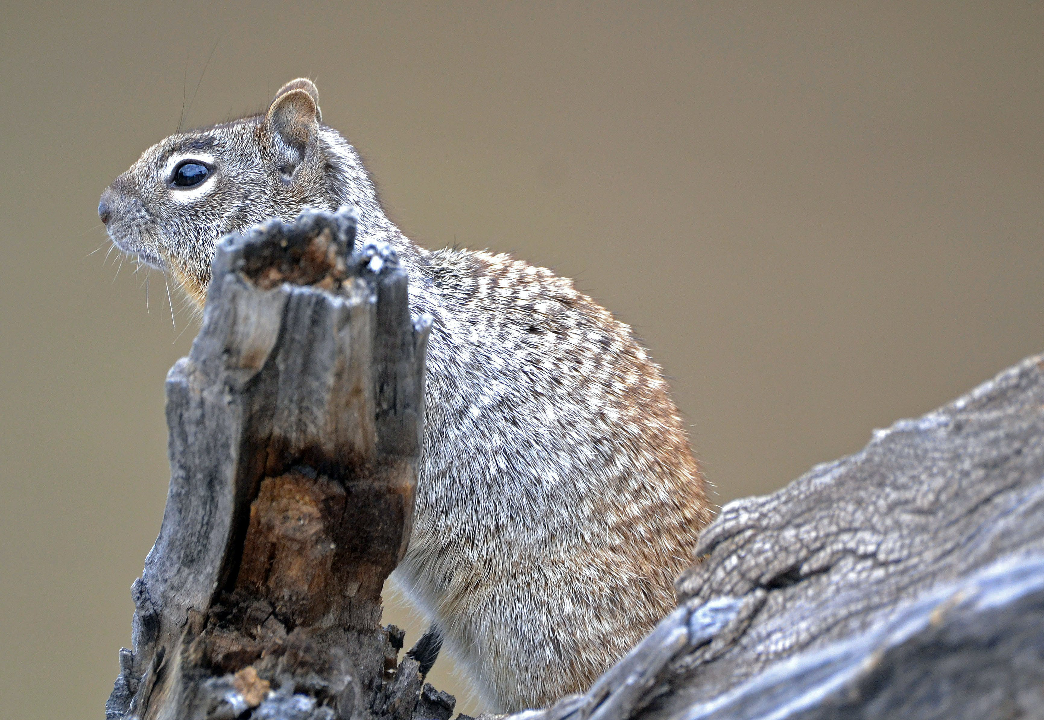 Free stock photo of mother nature, squirrel, wildlife