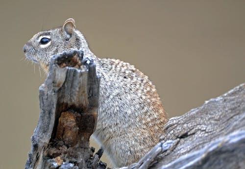 Doğa Ana, sincap, vahşi yaşam içeren Ücretsiz stok fotoğraf
