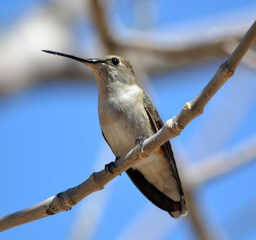 คลังภาพถ่ายฟรี ของ กลางวัน, กิ่ง, ตั้งอยู่, นกที่เพรียกร้อง