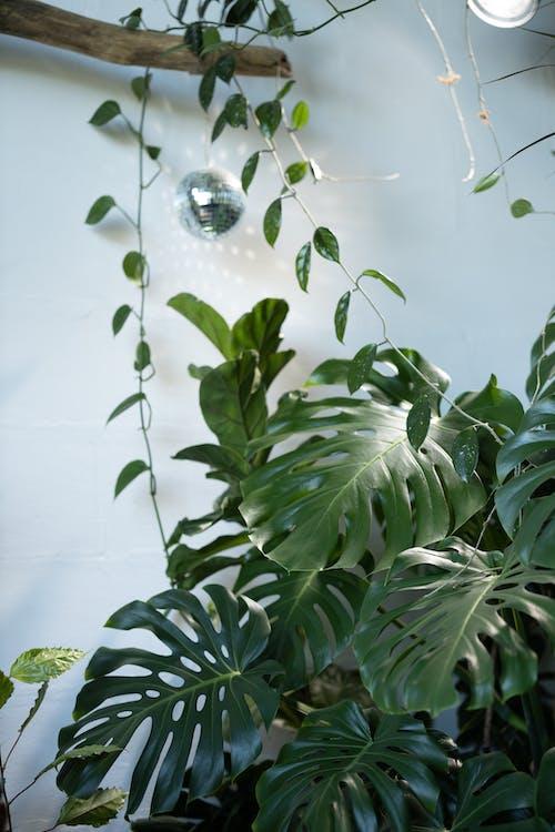copy space, monstera deliciosa, 나뭇잎의 무료 스톡 사진