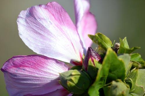 Doğa Ana, güzel çiçekler, pembe çiçek içeren Ücretsiz stok fotoğraf