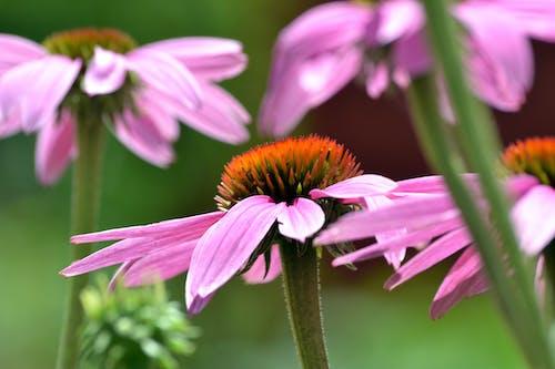Doğa Ana, dönemsel, güzel çiçekler içeren Ücretsiz stok fotoğraf
