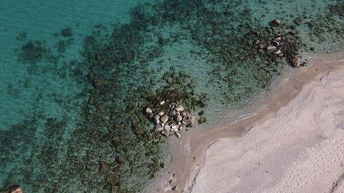Free stock photo of beach, fish, island