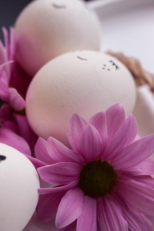 White Egg on Purple Flower