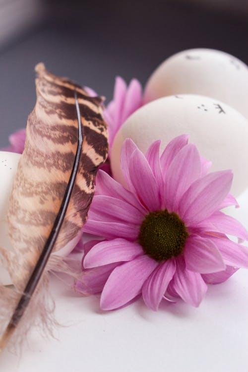 Pink and Brown Flower Beside White Ceramic Vase