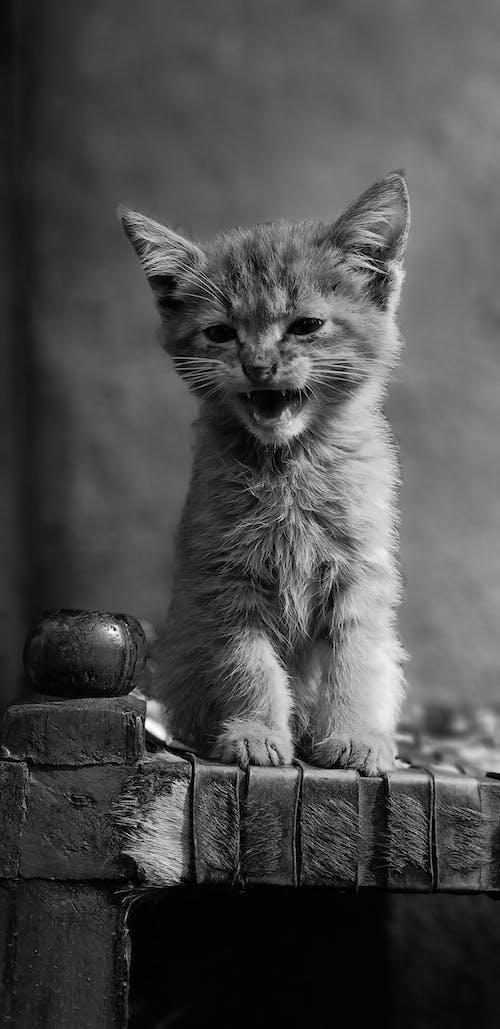 Gratis lagerfoto af dyr, dyrefotografering, gråtoneskala