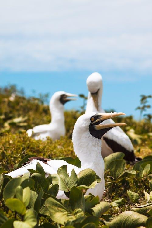 Free stock photo of abrolhos archipelago, abrolhos marine national park, animal