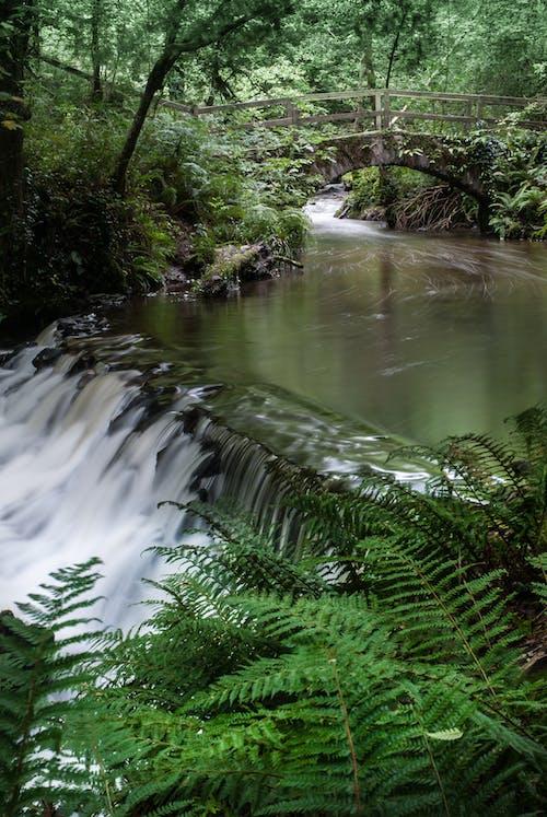 Photos gratuites de arbre, bois, cascade