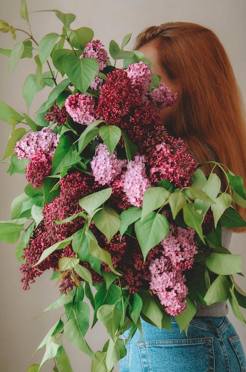 Ilmainen kuvapankkikuva tunnisteilla kasvikunta, kaunis kukka, kimppu