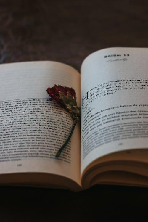 Free stock photo of book, book bindings, book series