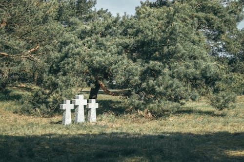 Cross Tombstones Near a Tree