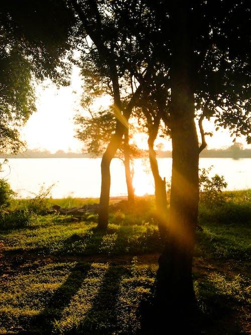傍晚的太陽, 樹木, 深綠色 的 免費圖庫相片