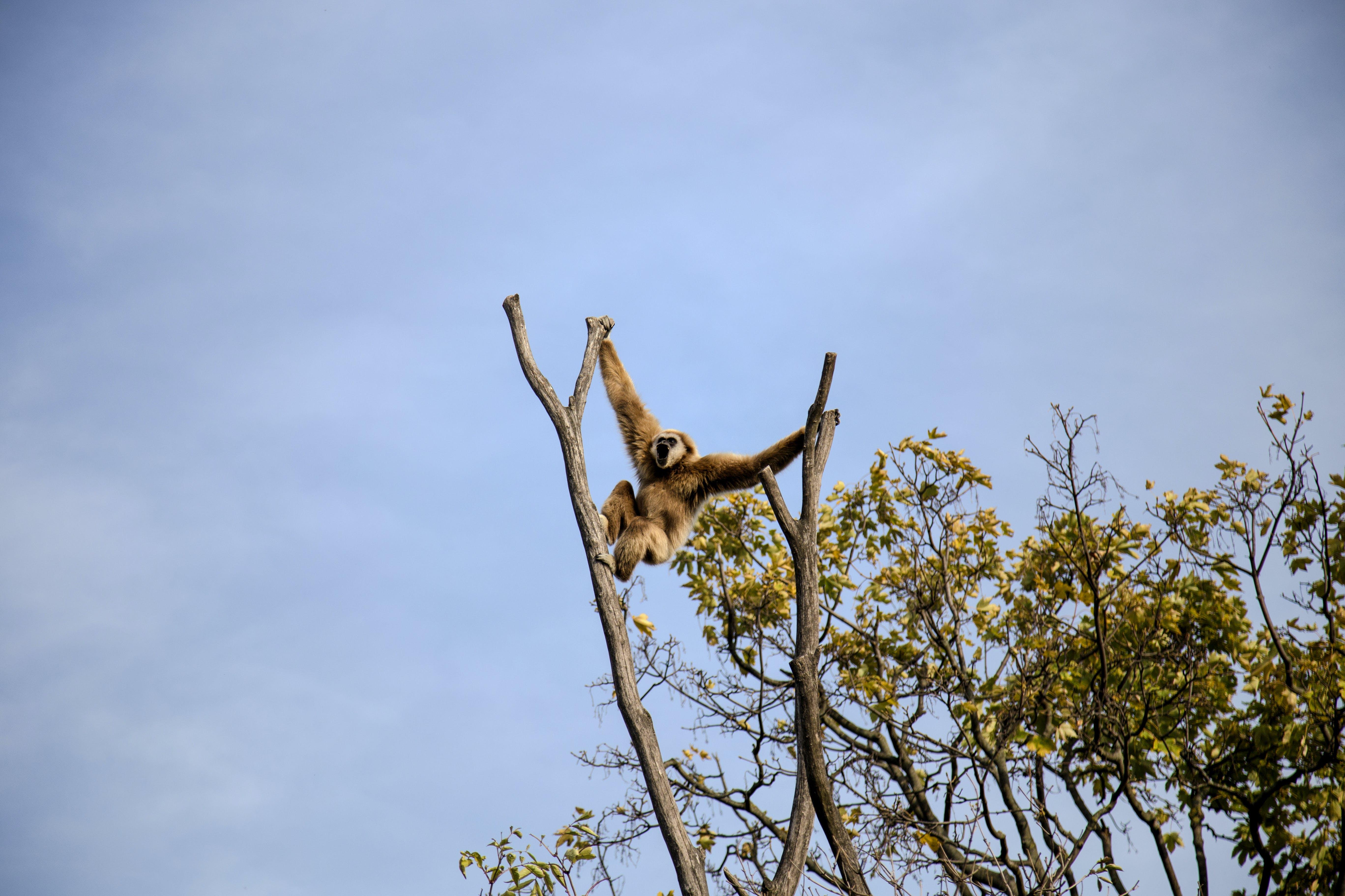Photography of Monkey Climbing on Tree