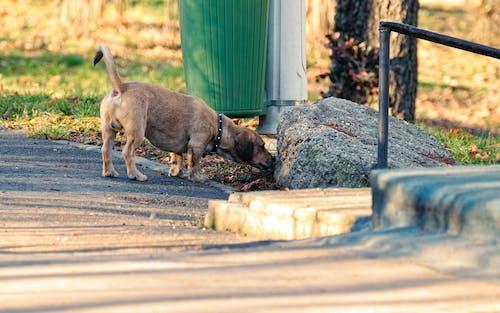 Foto profissional grátis de acasalar, animal, animal de estimação, cachorro