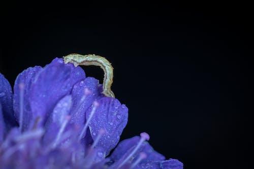 คลังภาพถ่ายฟรี ของ กลางแจ้ง, กลีบดอกไม้, การเจริญเติบโต