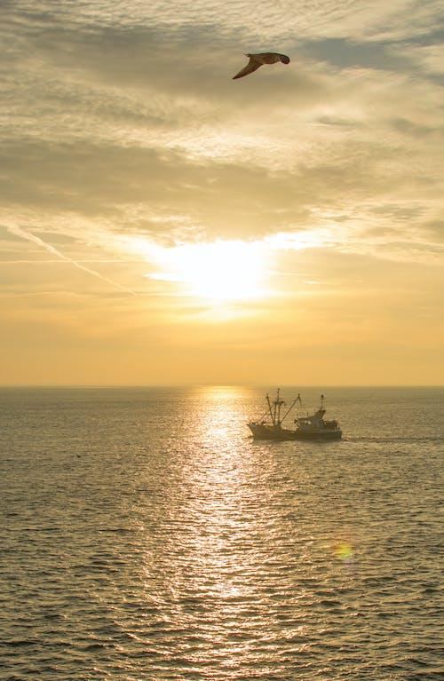 Free stock photo of boat, evening, sunshine, Texel