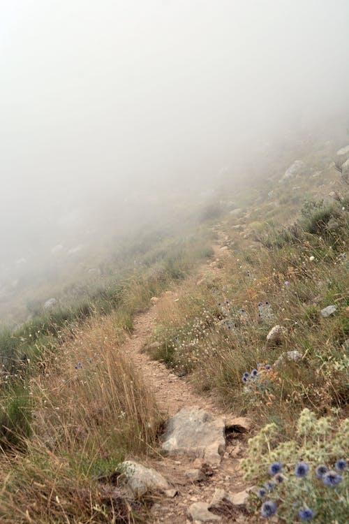 berg, blommor, dimma