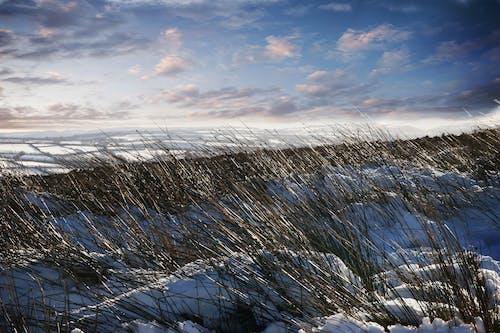 Foto stok gratis #exmoor in winter