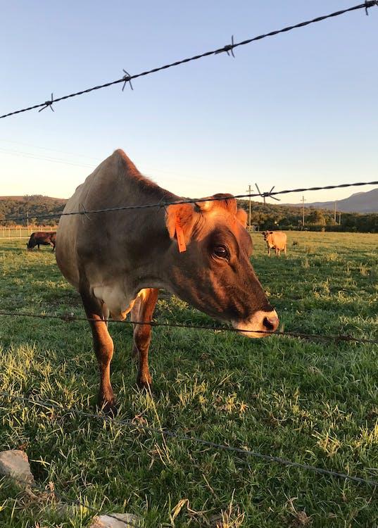 agricultura, al aire libre, alambre de espino