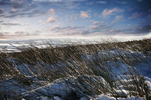 Green Grass With Snow