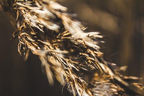건조한, 곡물, 밀, 시리얼의 무료 스톡 사진