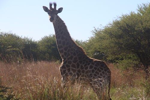 Kostnadsfri bild av däggdjur, dagsljus, djur, djurfotografi