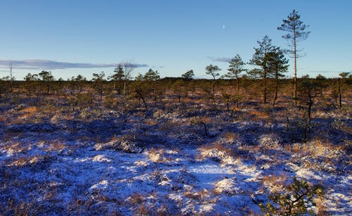 Foto d'estoc gratuïta de alba, arbres, àrid, cel