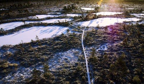 公園, 冬季, 冷, 天性 的 免費圖庫相片