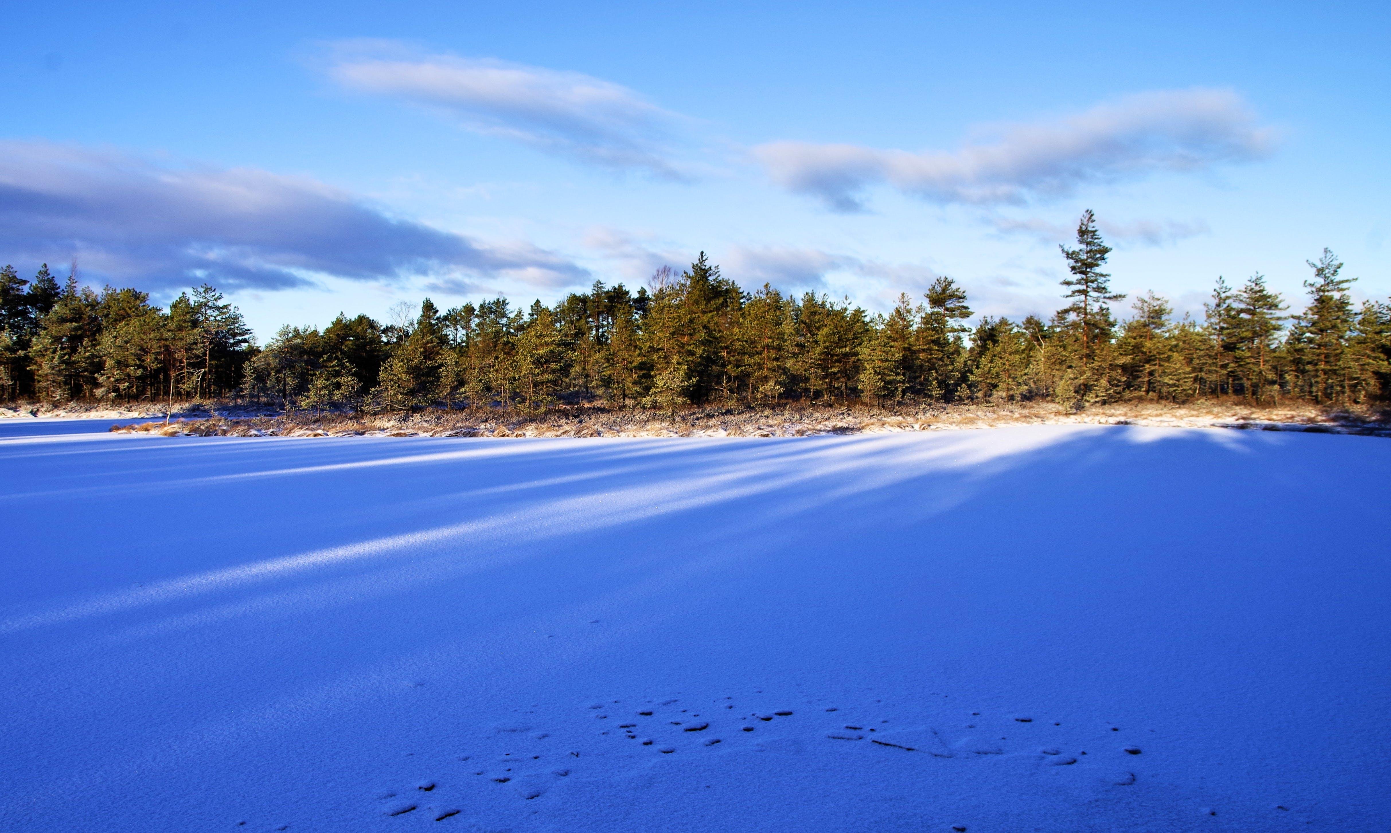 Immagine gratuita di alberi, ambiente, boschi, campo
