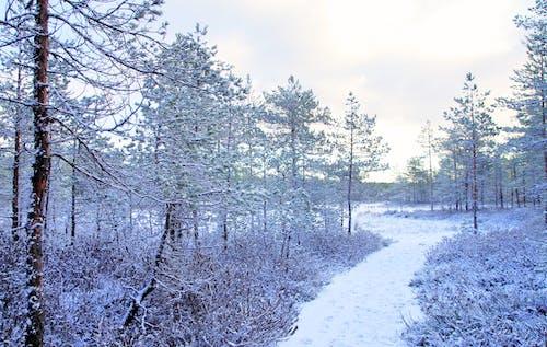 Gratis lagerfoto af forkølelse, frossen, frost, frostklart vejr