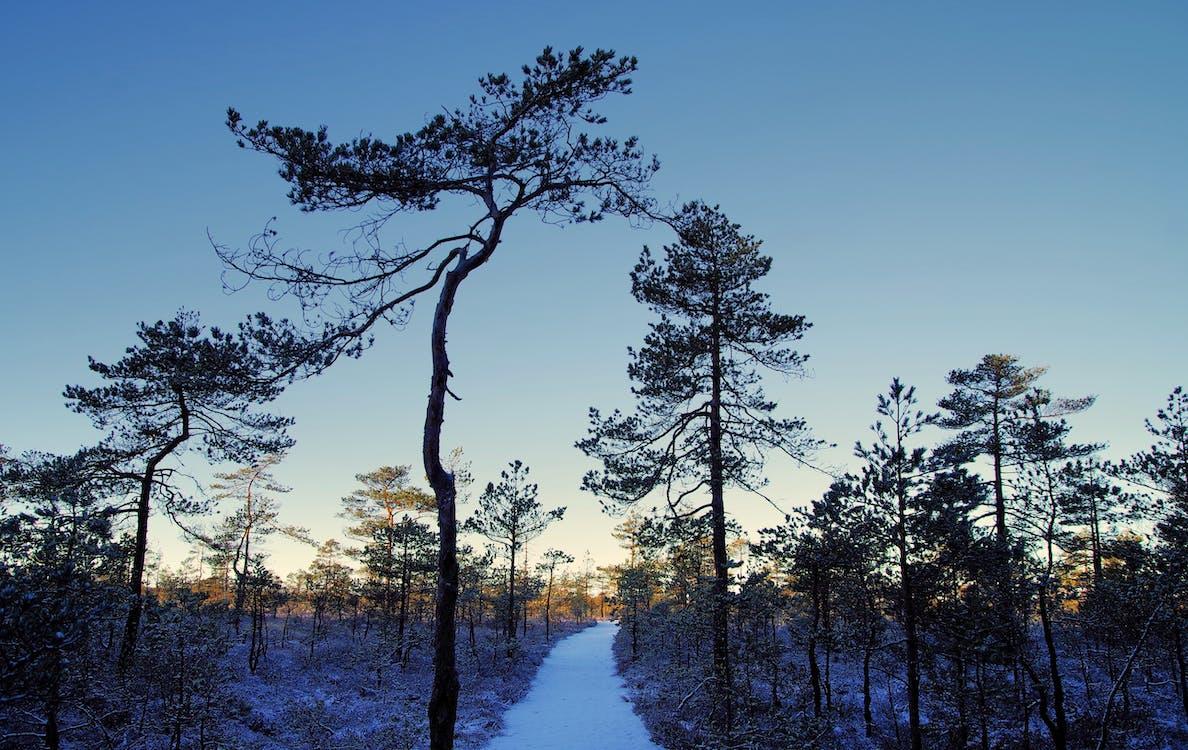 ağaçlar, buz, buz tutmuş