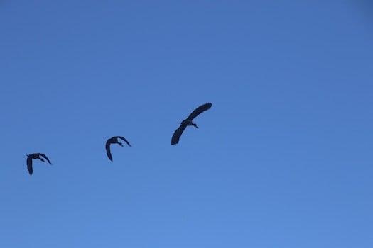 Photography of Three Flying Birds