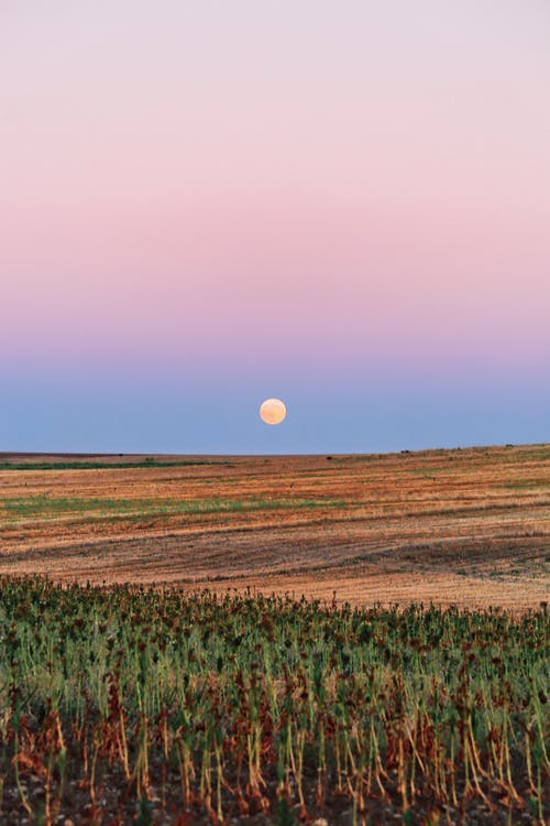 Picturesque view of colorful field in rural terrain and blue and pink cloudless sky with full moon above horizon