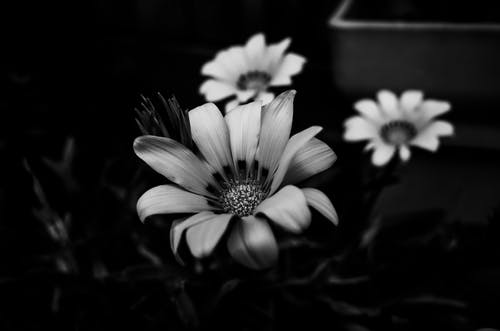 Free stock photo of art, blur, bright