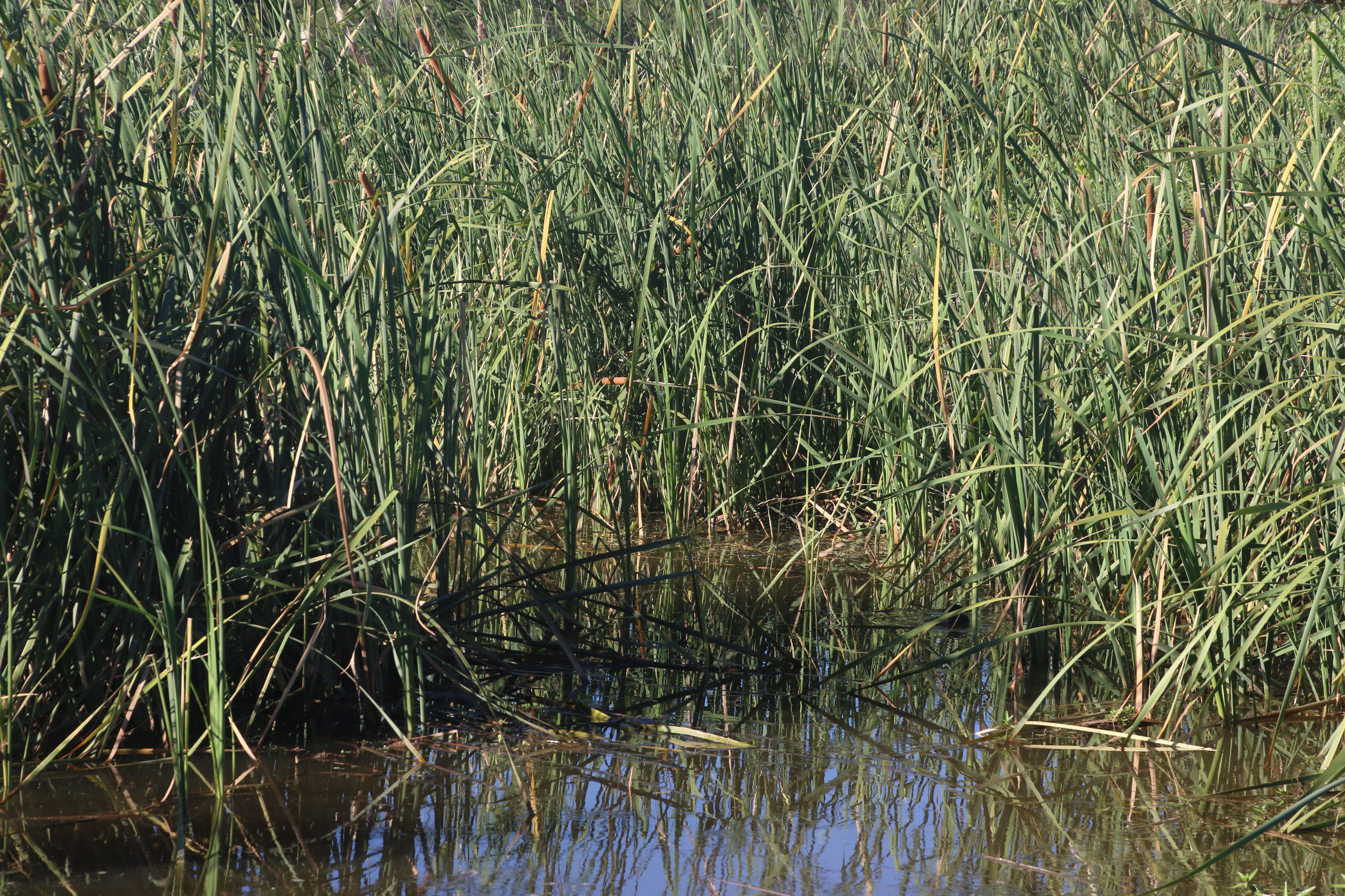 Photo of Grass on the Pond