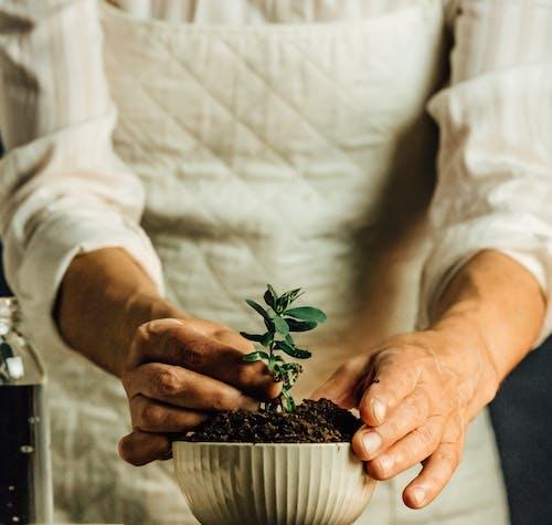 Gratis lagerfoto af bæredygtighed, blad, familie