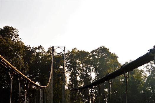 Free stock photo of trees, metal, suspension bridge, beautiful