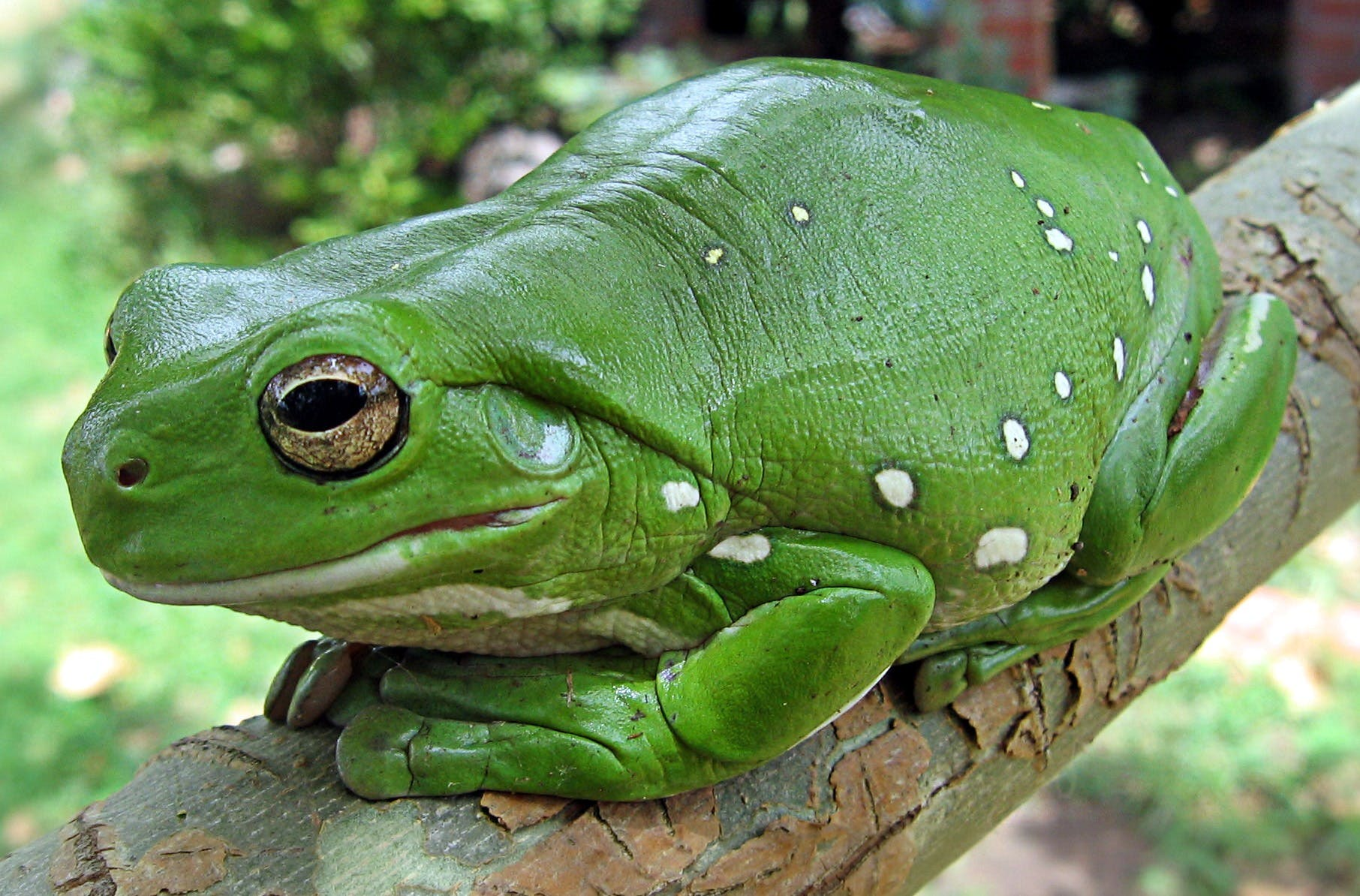 Green and White Potted Frog on Green Branch