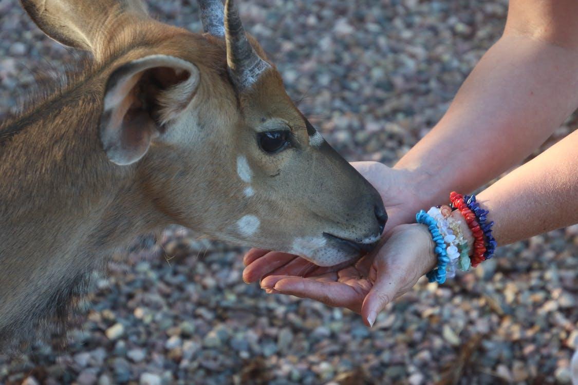 alimentant, animal, animal salvatge