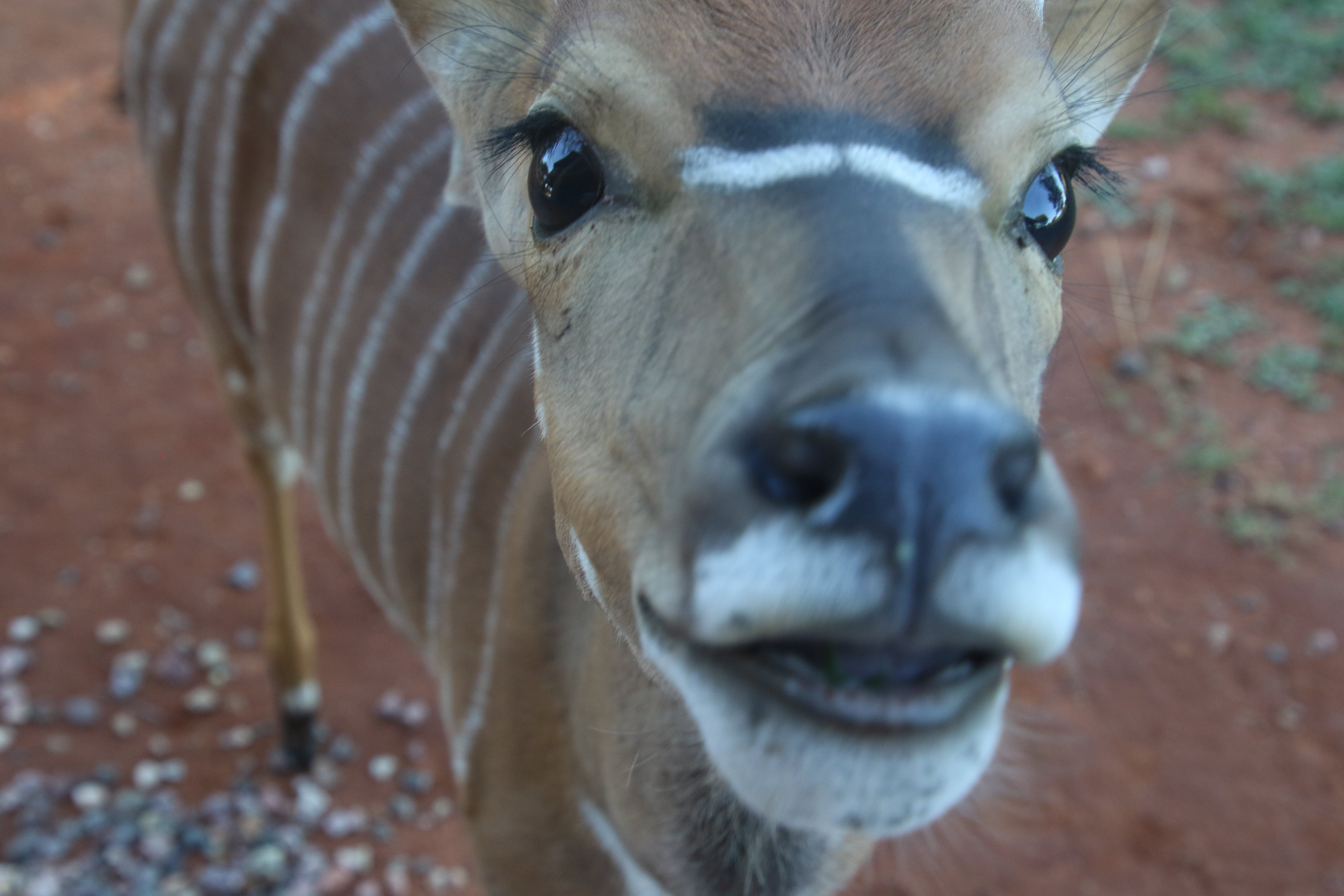 Close-Up Photography of Brown and White Striped Deer