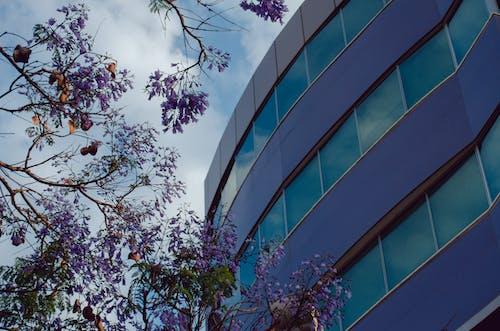 Darmowe zdjęcie z galerii z budynek, cypr, drzewo, fioletowy