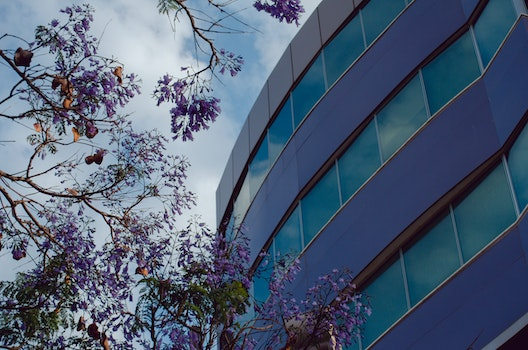 Free stock photo of city, building, purple, tree