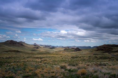 Immagine gratuita di alba, arido, cactus