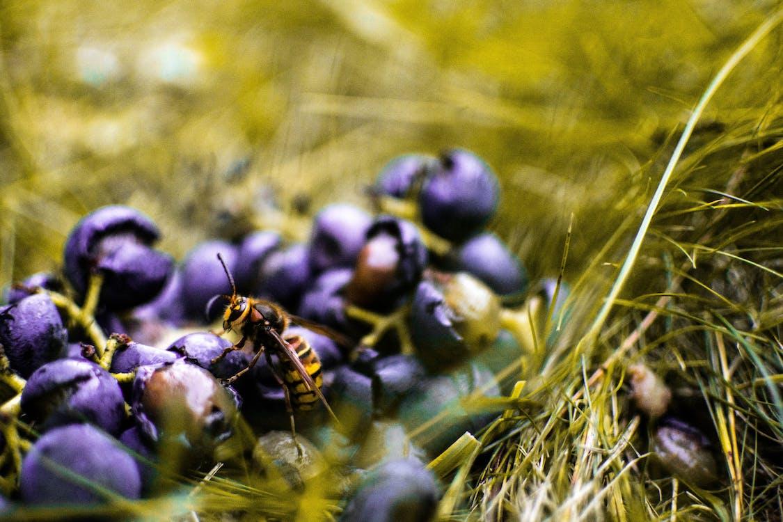 小, 昆蟲, 景深