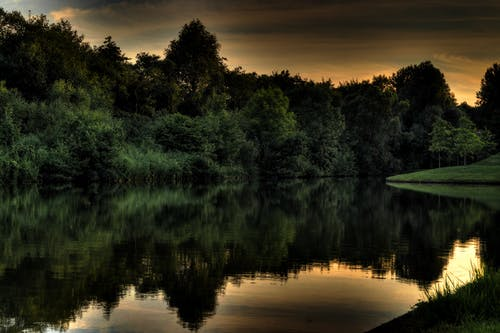 Lake and Green Leafed Trees
