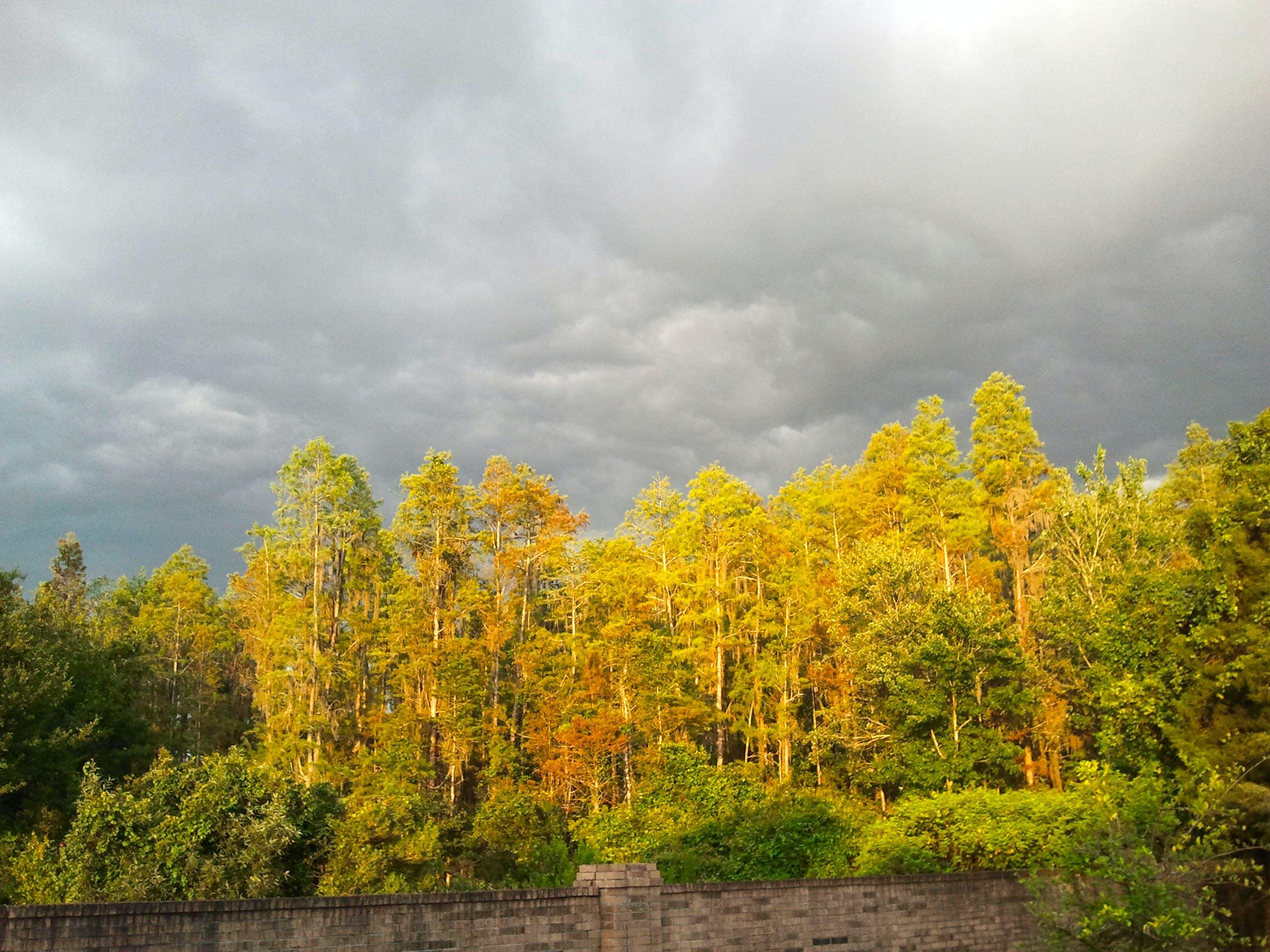 Free stock photo of autumn colours, grey sky, pond