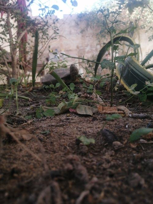 Photos gratuites de abri de jardin, tortue