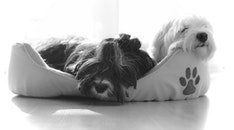black-and-white, bed, animal