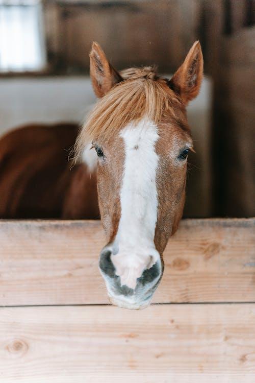 at, baş, Çiftlik hayvanı içeren Ücretsiz stok fotoğraf